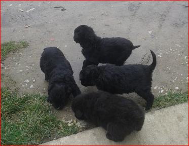 Photo of 5 bebica ostavljeno u Sarvašu!!!